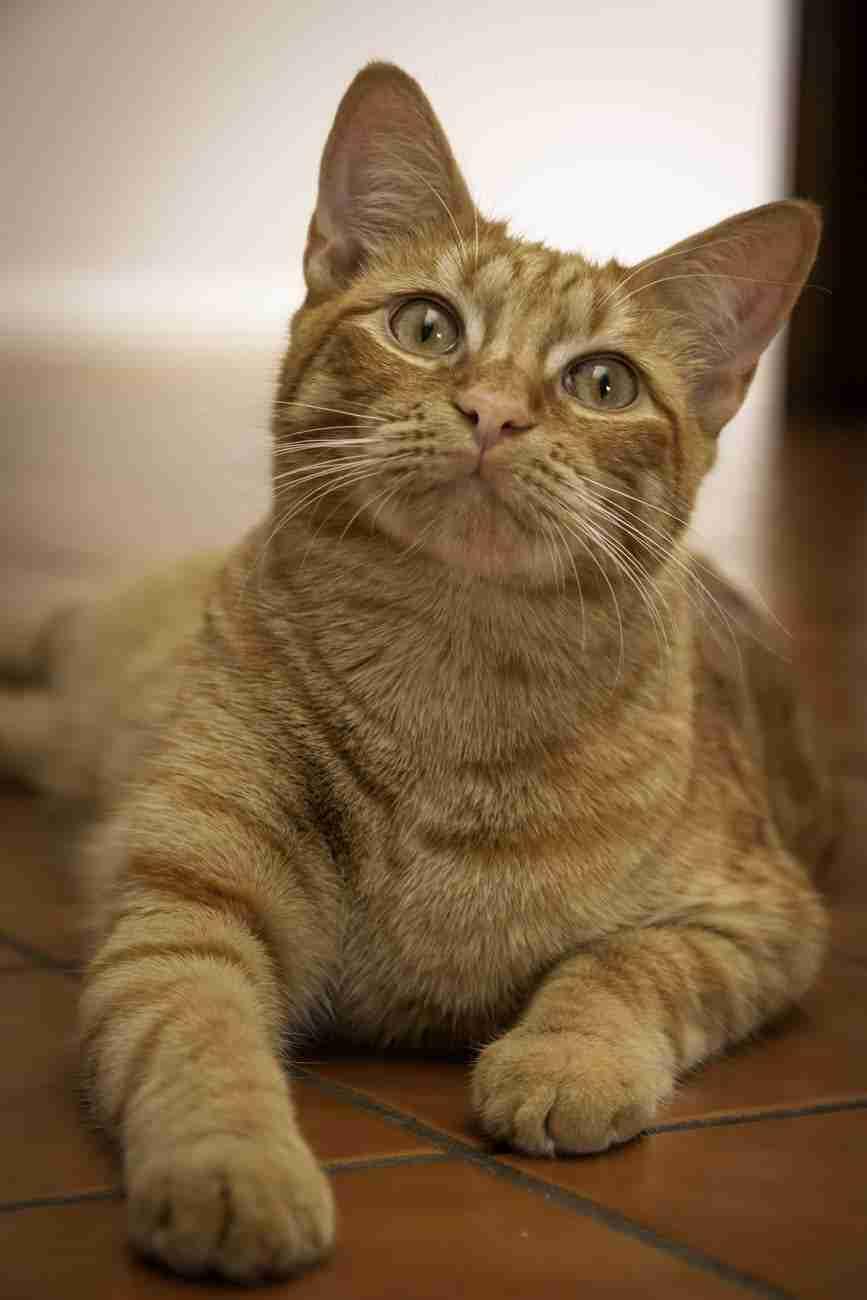 DK-Cats16