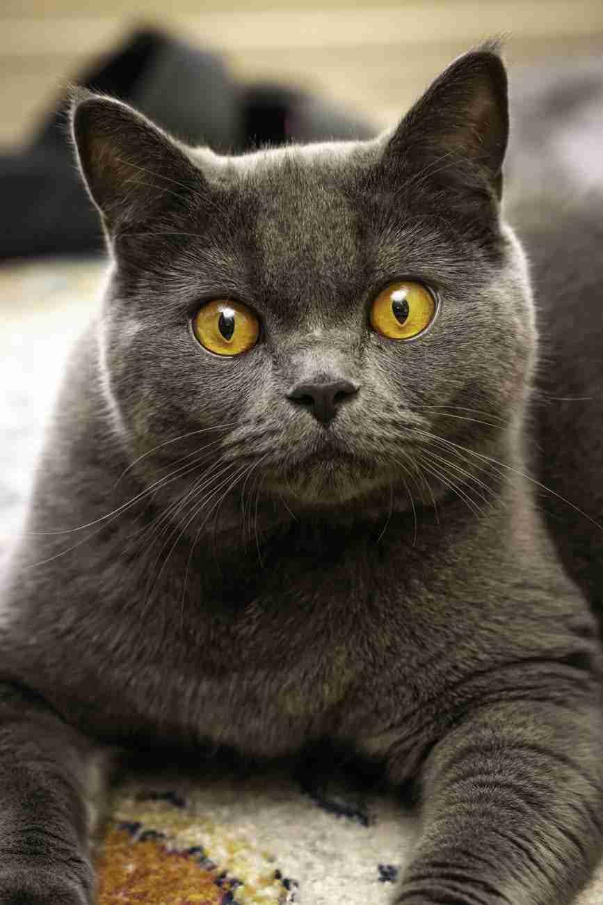 DK-Cats18