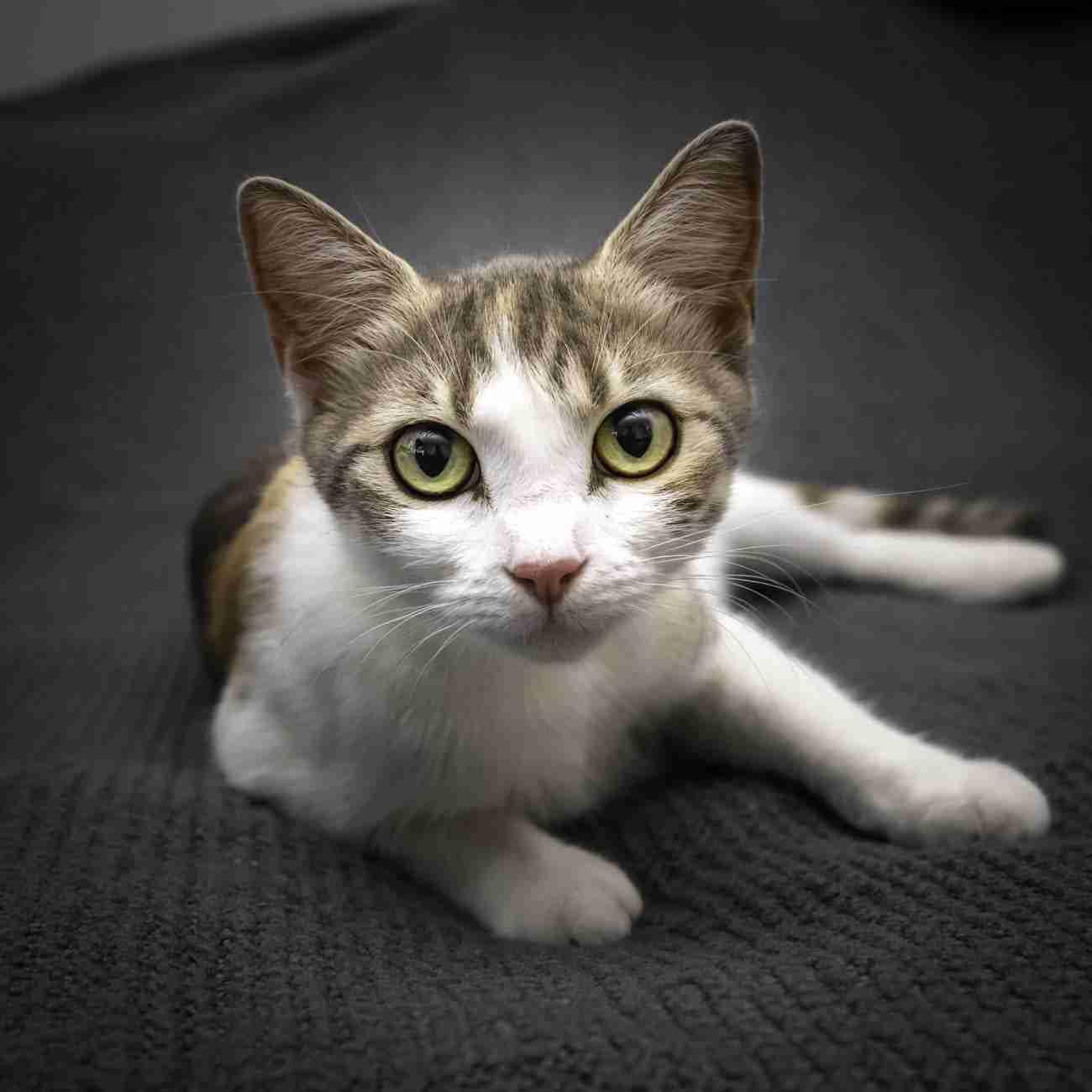 DK-Cats24