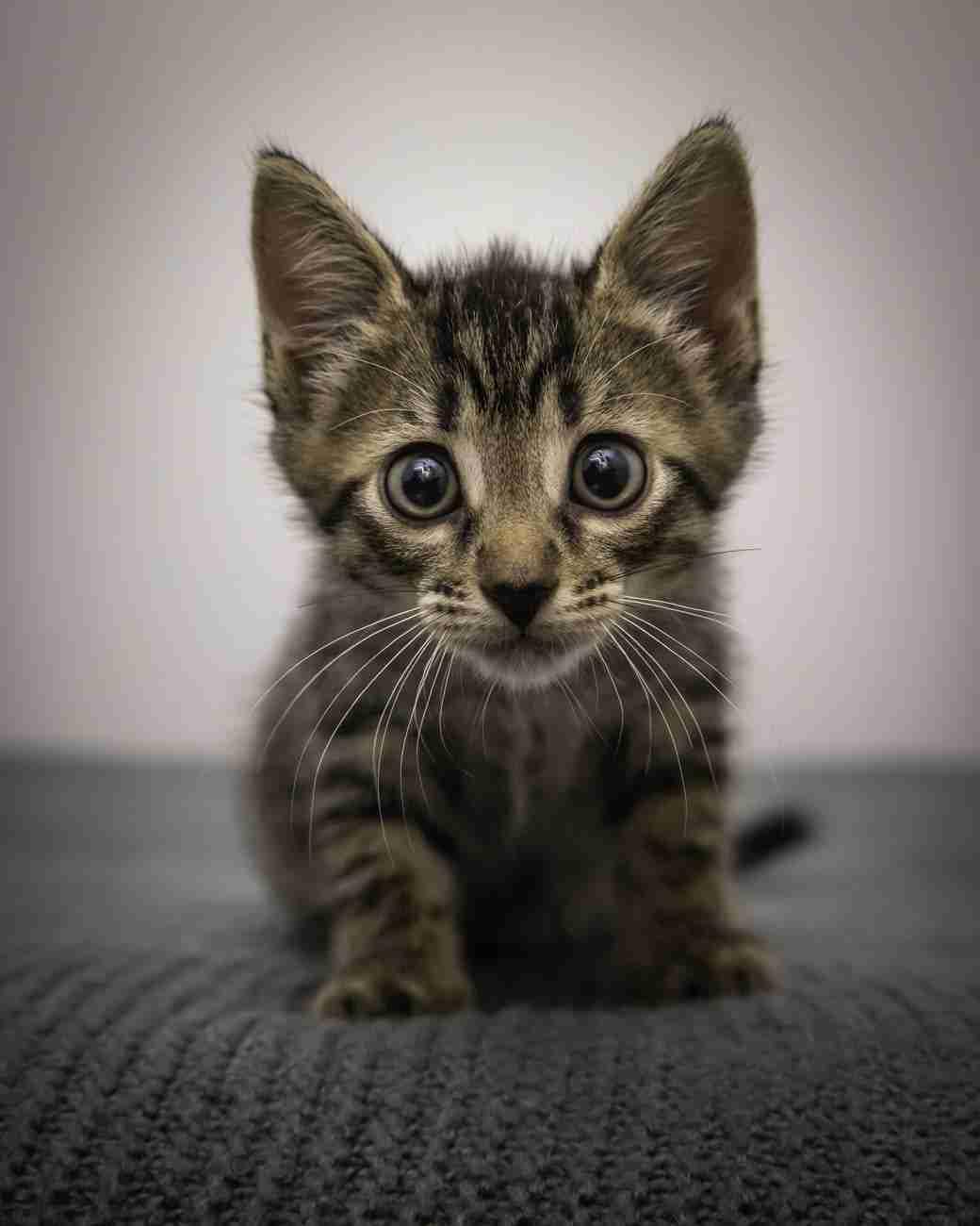 DK-Cats26