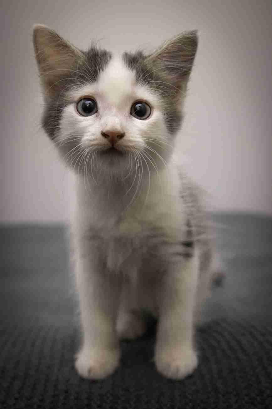 DK-Cats27