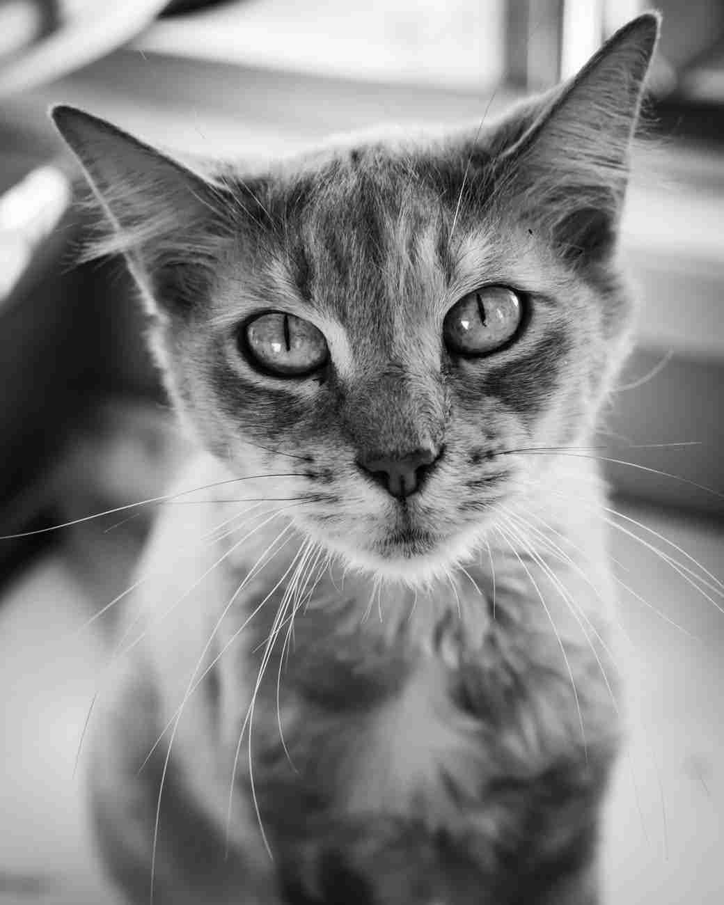 DK-Cats31