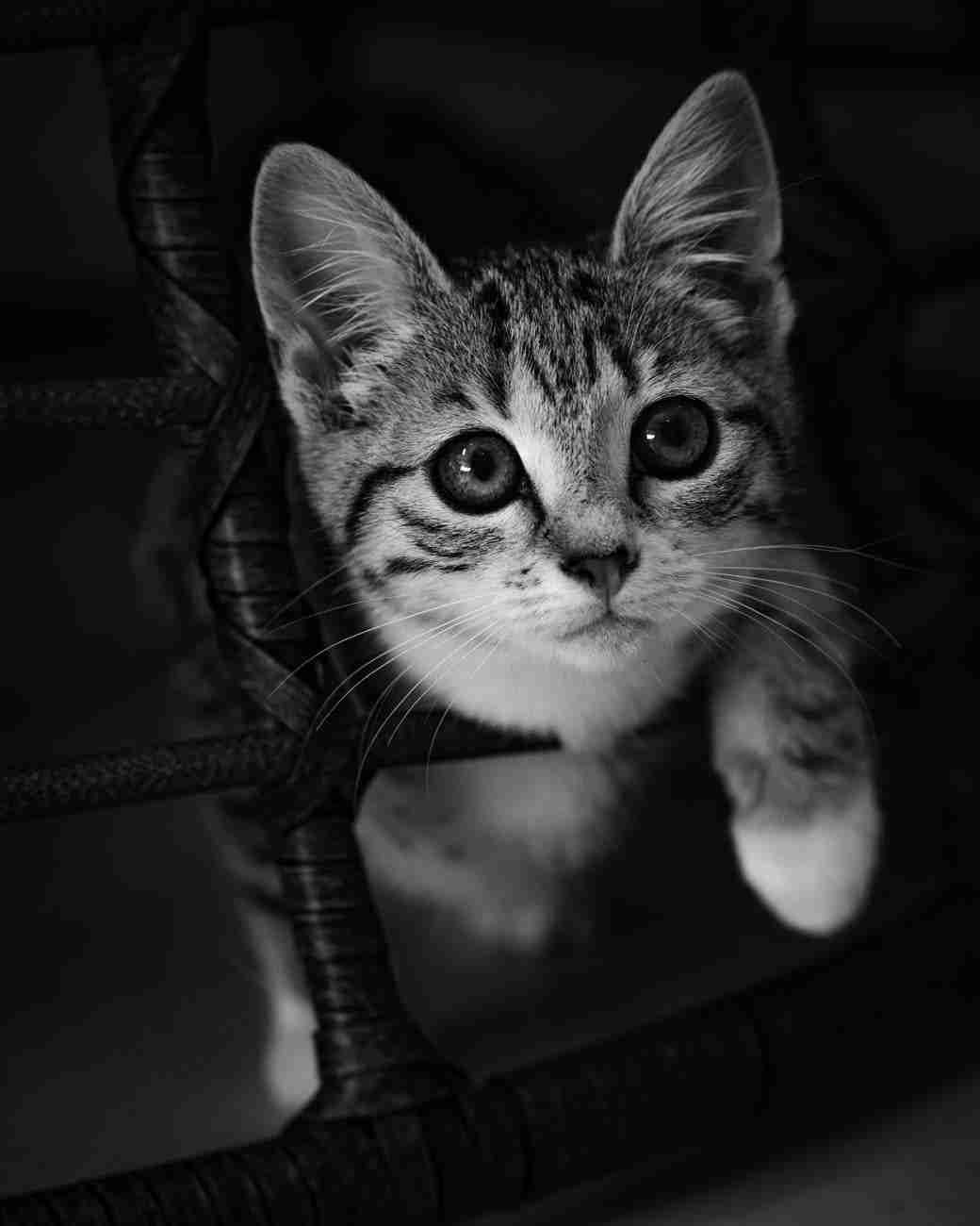 DK-Cats37