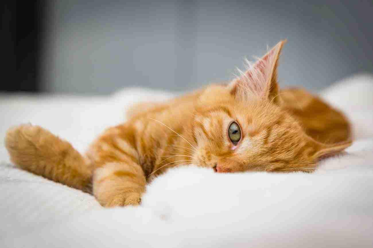 DK-Cats44