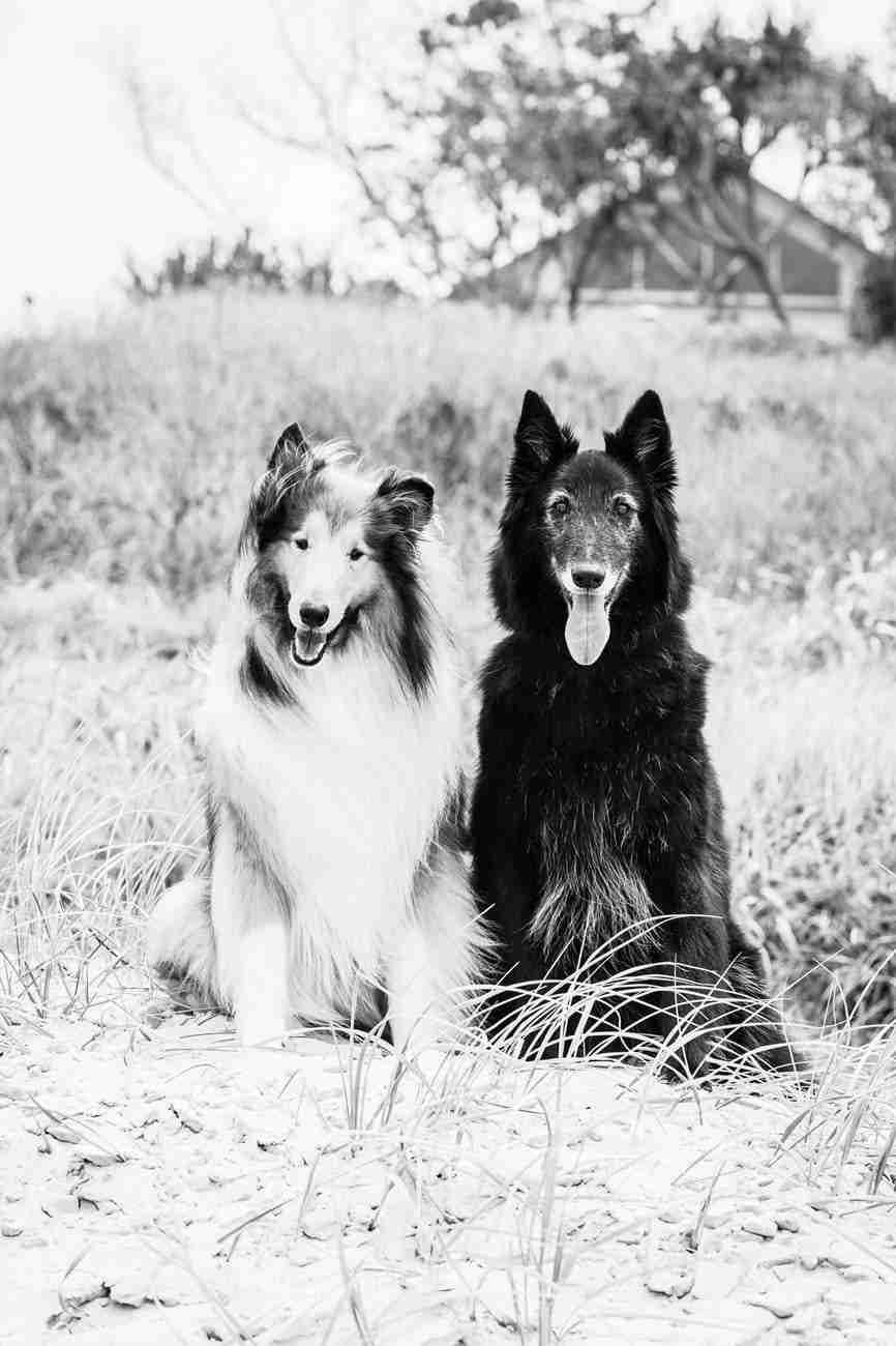 DK-Dogs06