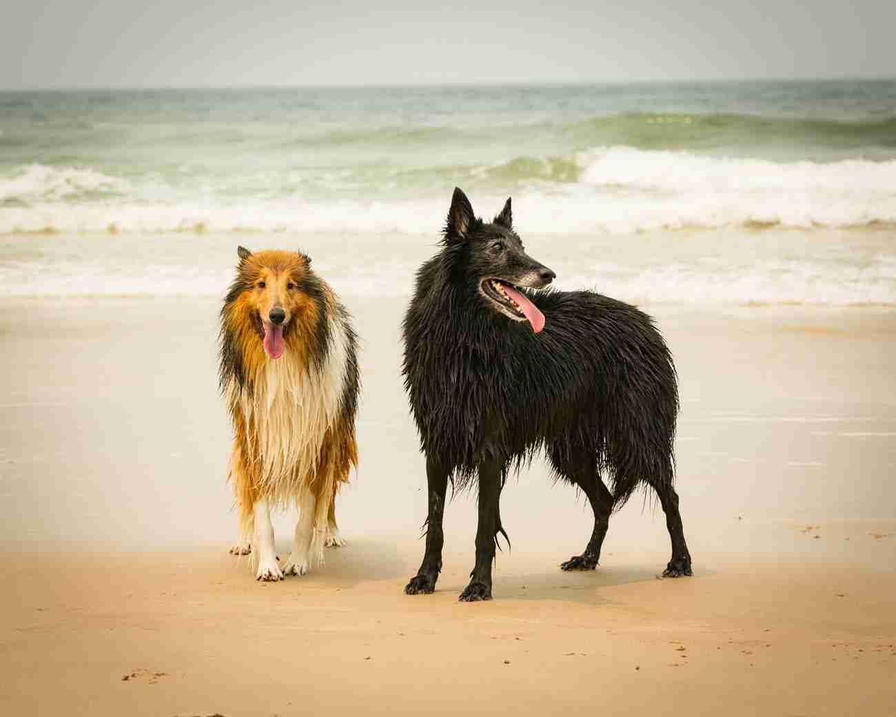 DK-Dogs08