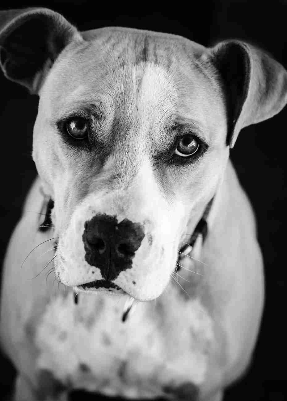 DK-Dogs84
